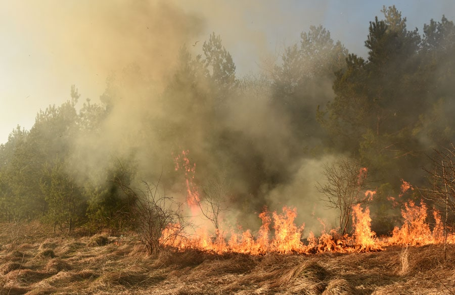 Flame merging: Investigating the spread of wildland fires